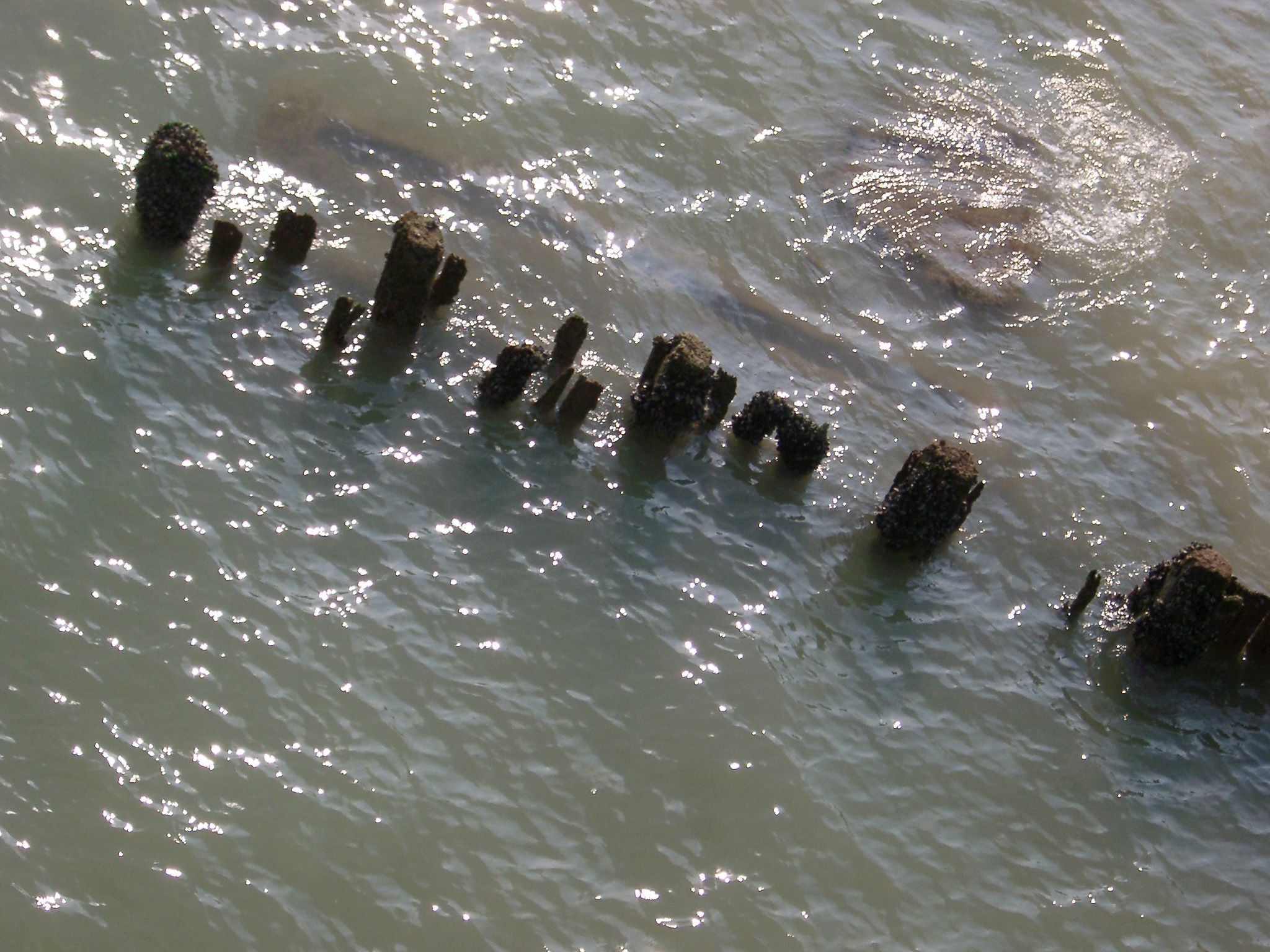 Old Rotten Wooden Groynes on the Sea Water in Brighton, England