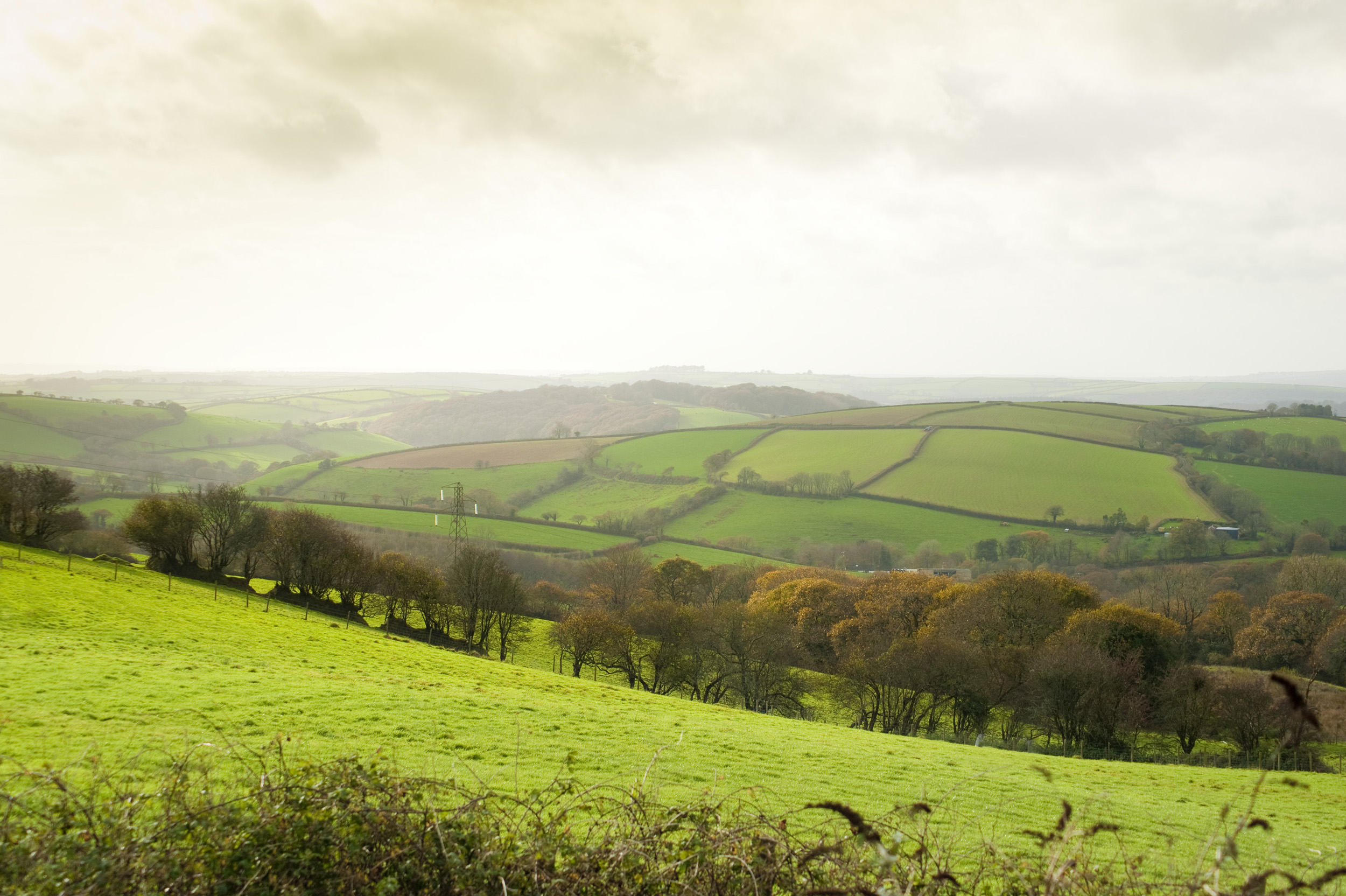 rolling green pastures in the cornish countryside