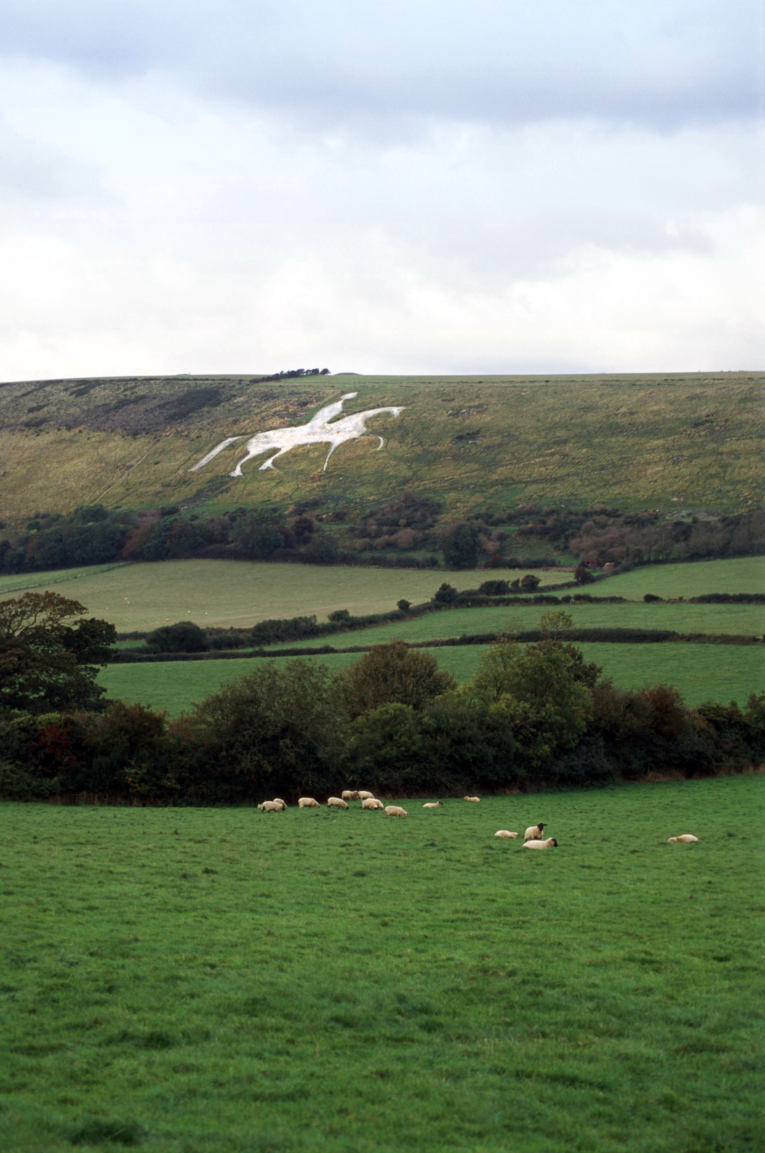 view of the famous white horse on Osmington hill , south dorset downs