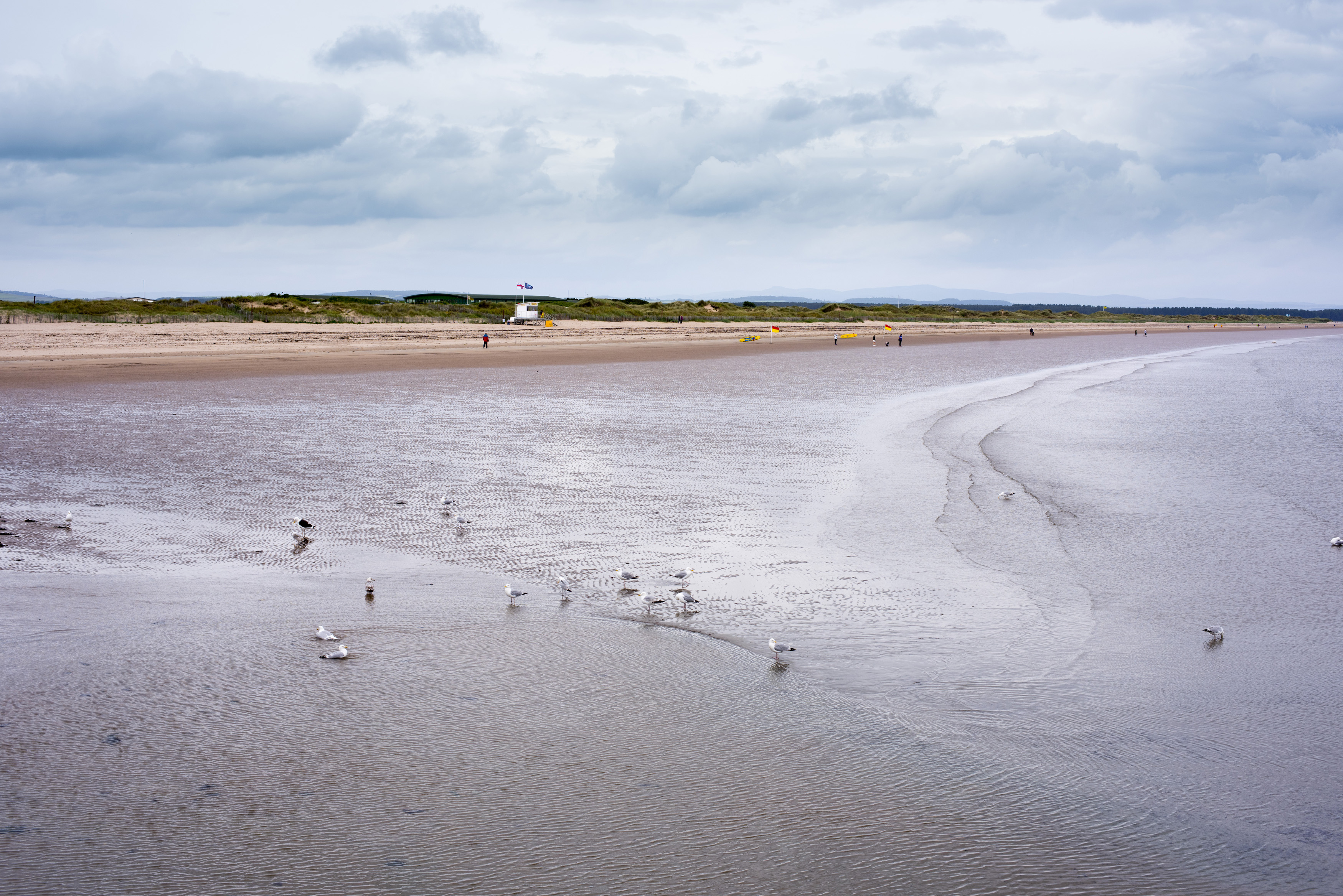 Seagulls standing in the shallow water of a low tide on the beach at St Andrews, Scotland under a grey cloudy sky in a scenic landscape