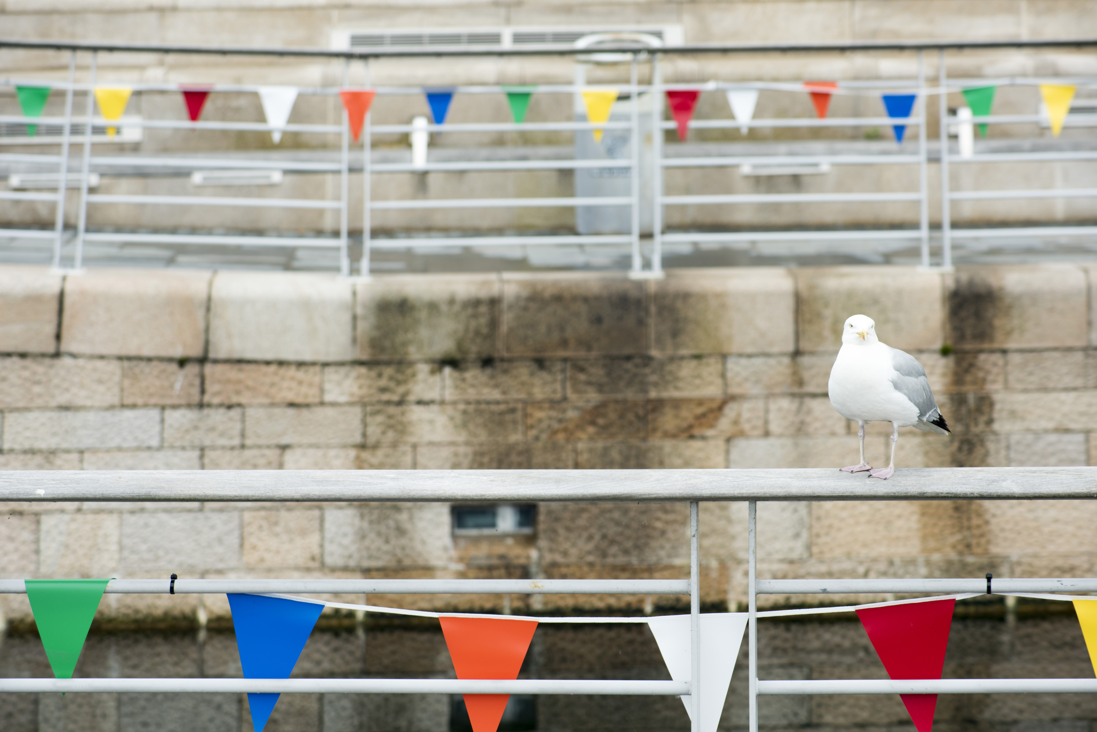 Single large seagul perched on railing at boat dock in Liverpool, United Kingdom