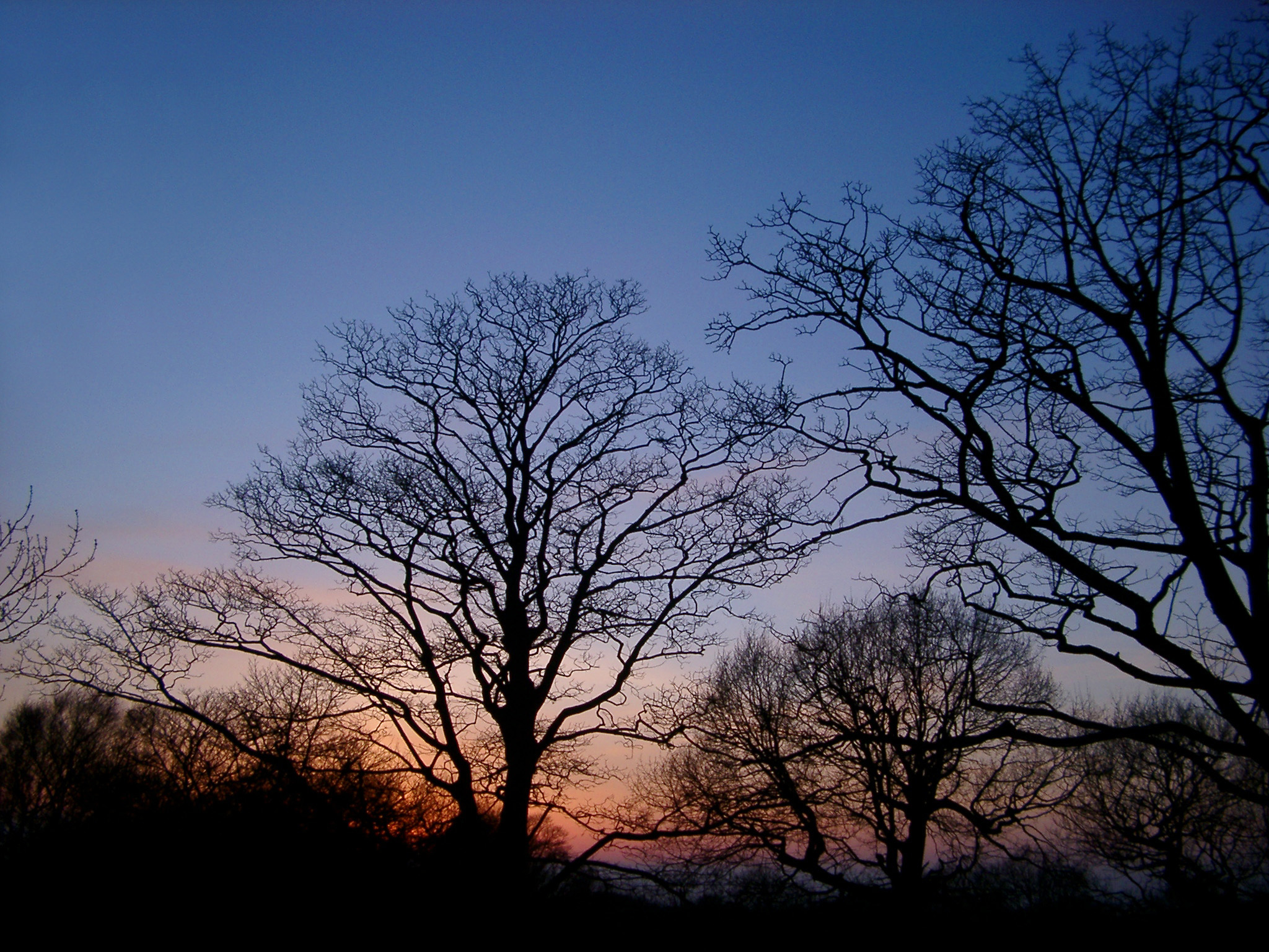 Free Stock photo of Silhouettes of bare deciduous trees at