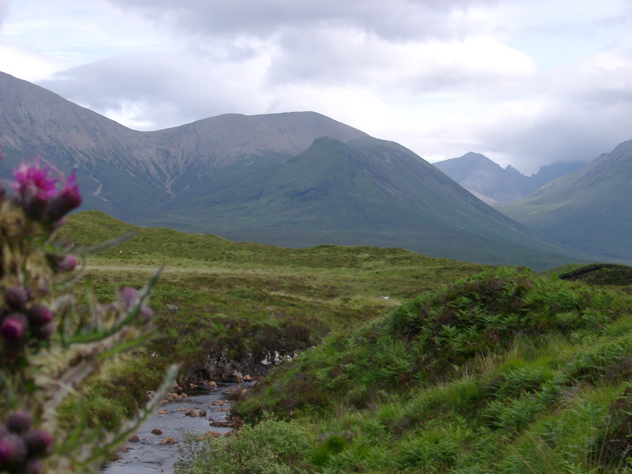 Scottish thistle flowering alongside a meandering stream in the misty mountains of the Scottish Highlands