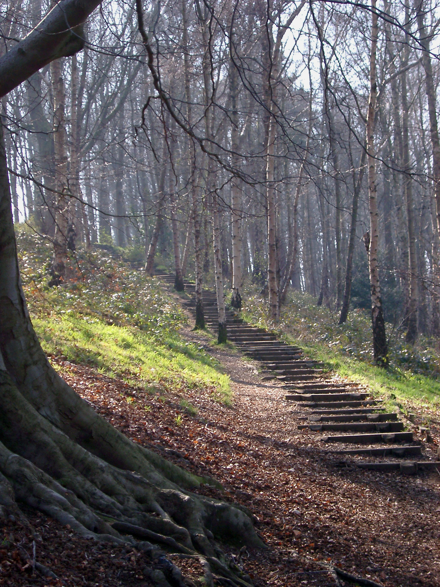 Rustic steps on a rural hiking trail or footpath meandering up hill through open woodland