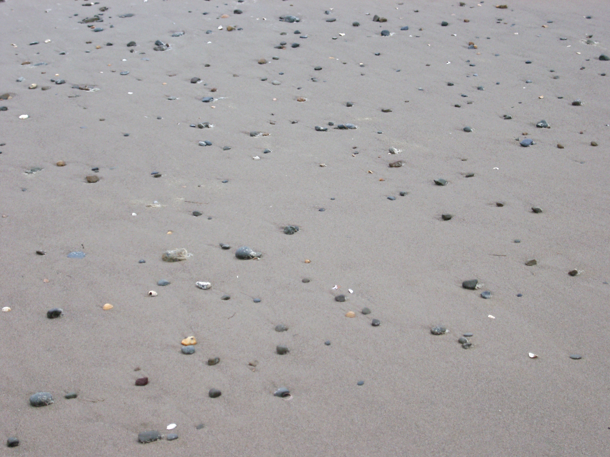Background of shells lying on wet beach sand left stranded by the receding tide