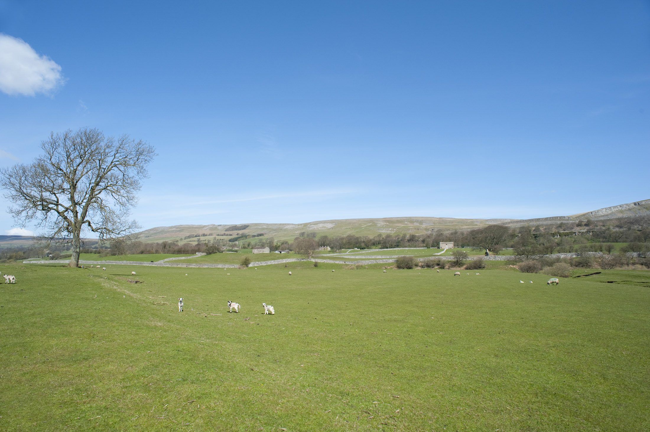 free stock photo of spring in wensleydale photoeverywhere