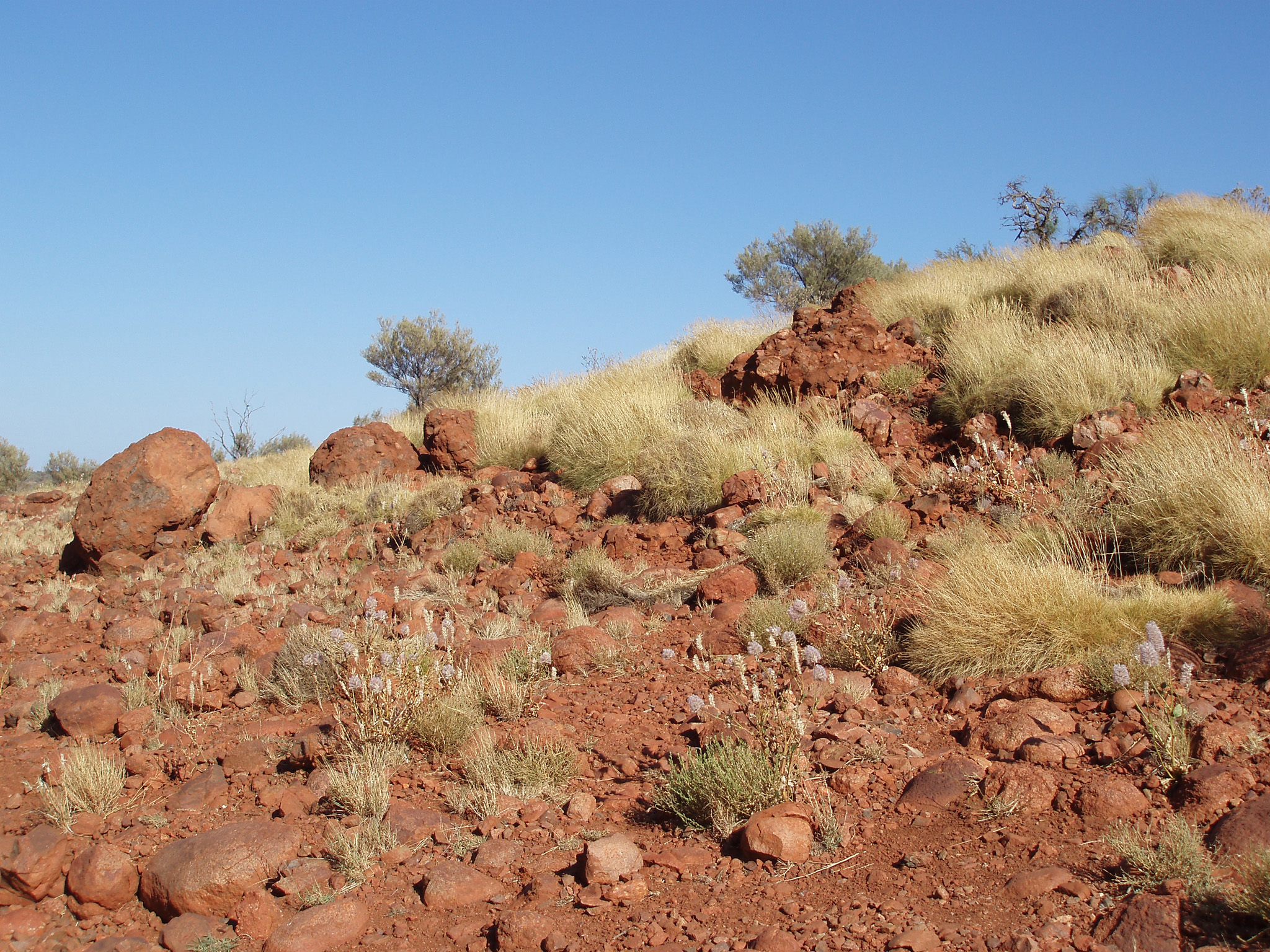 Small Grasses on Rocky Red Brown Land in Australia on Light Blue Sky Background.