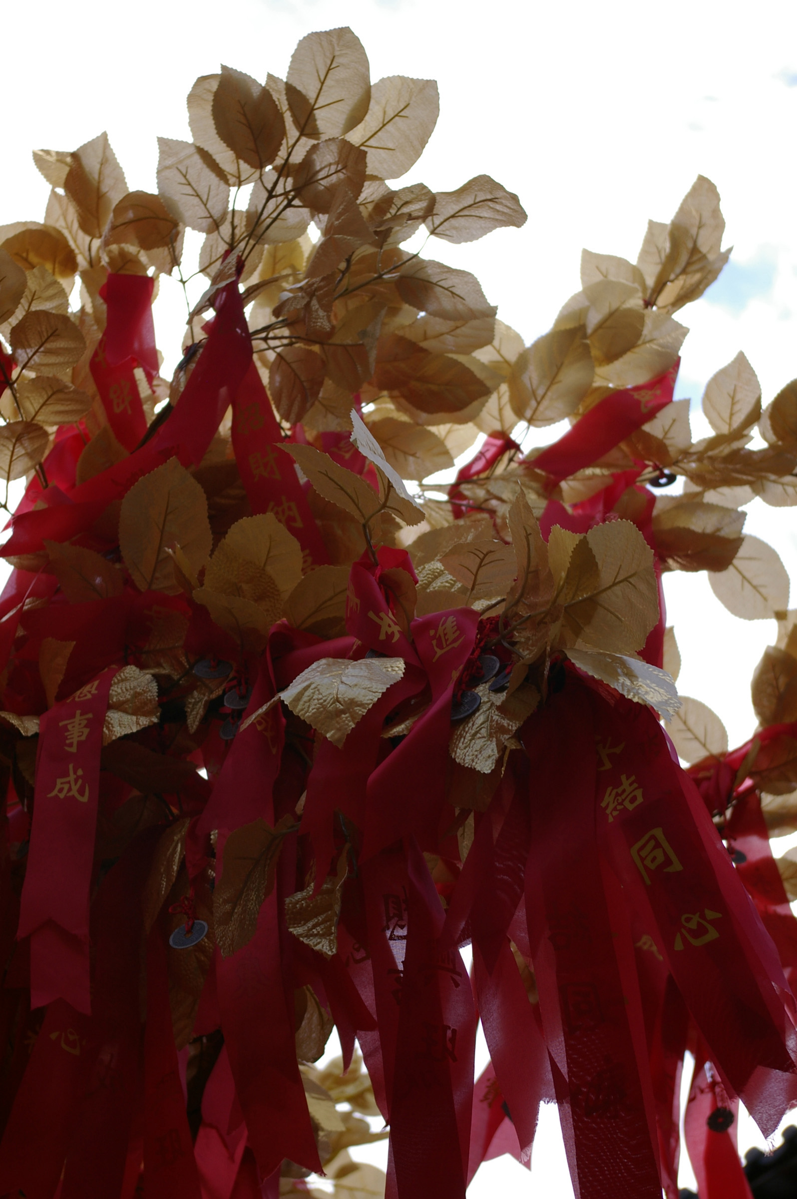 Close up Brown Leaves and Red Ribbons on Chinese Lucky Tree with White Background.
