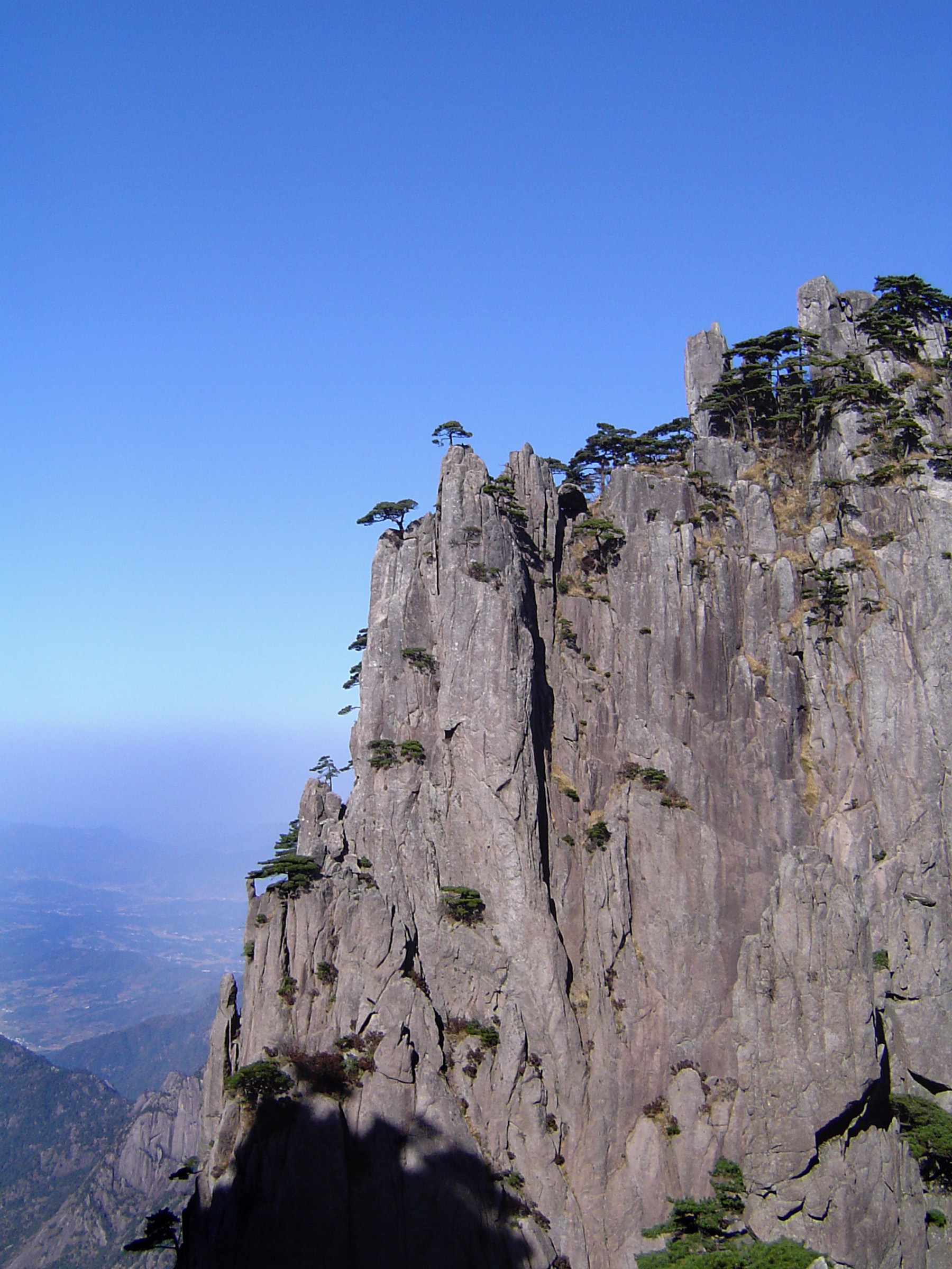 Pine Trees Growing at Huangshan Yellow Mountain at China. Captured with Light Blue Sky Background.