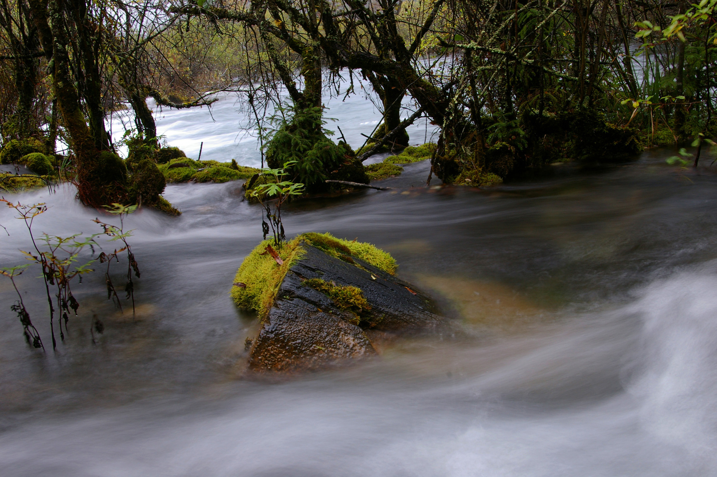 Nature Scenic of Moss Covered Rocks in Flowing River