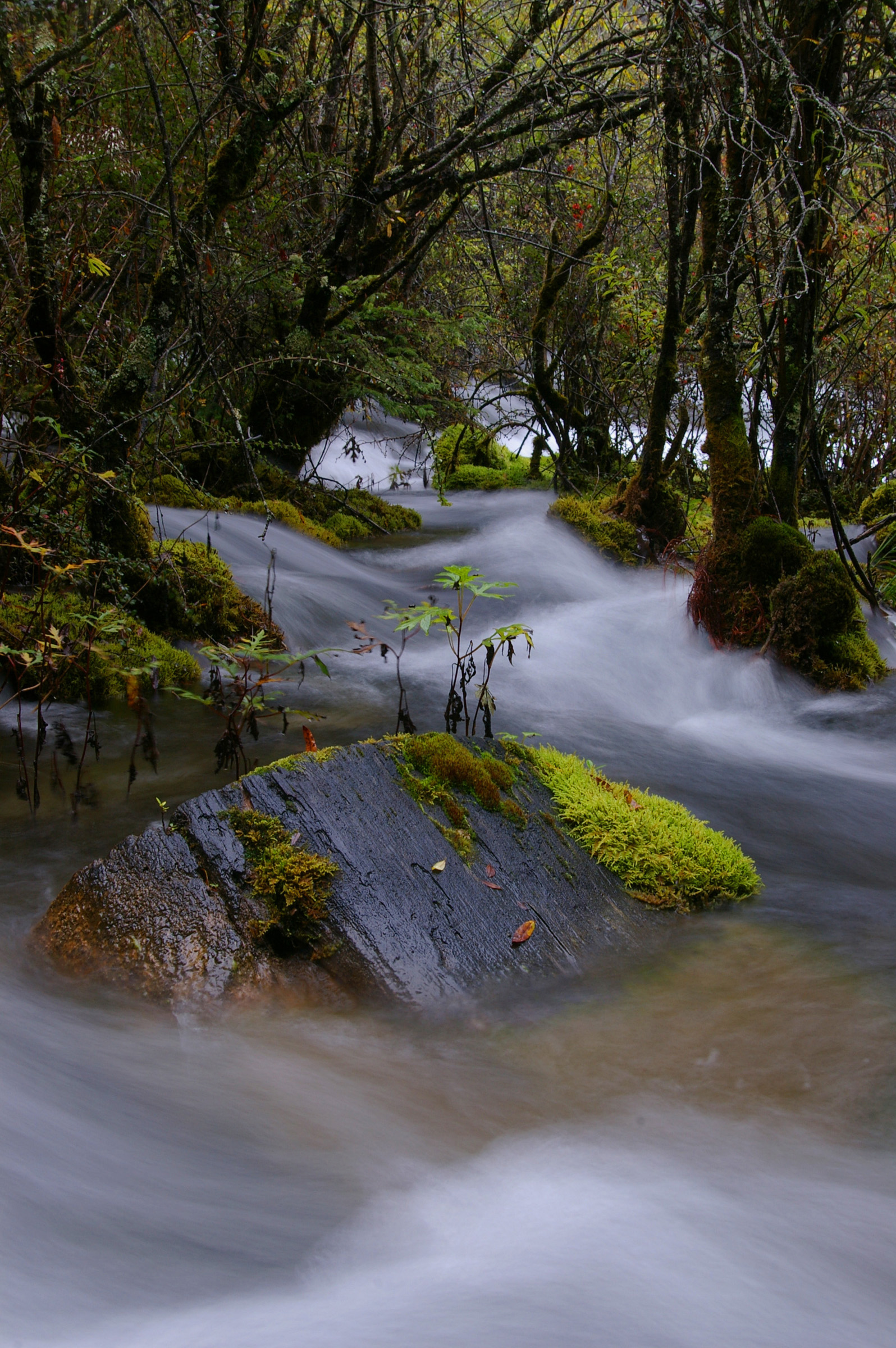 Long exposure of a mossy stream flowing over rocks in a woodland landscape showing the scenic natural beauty of the environment