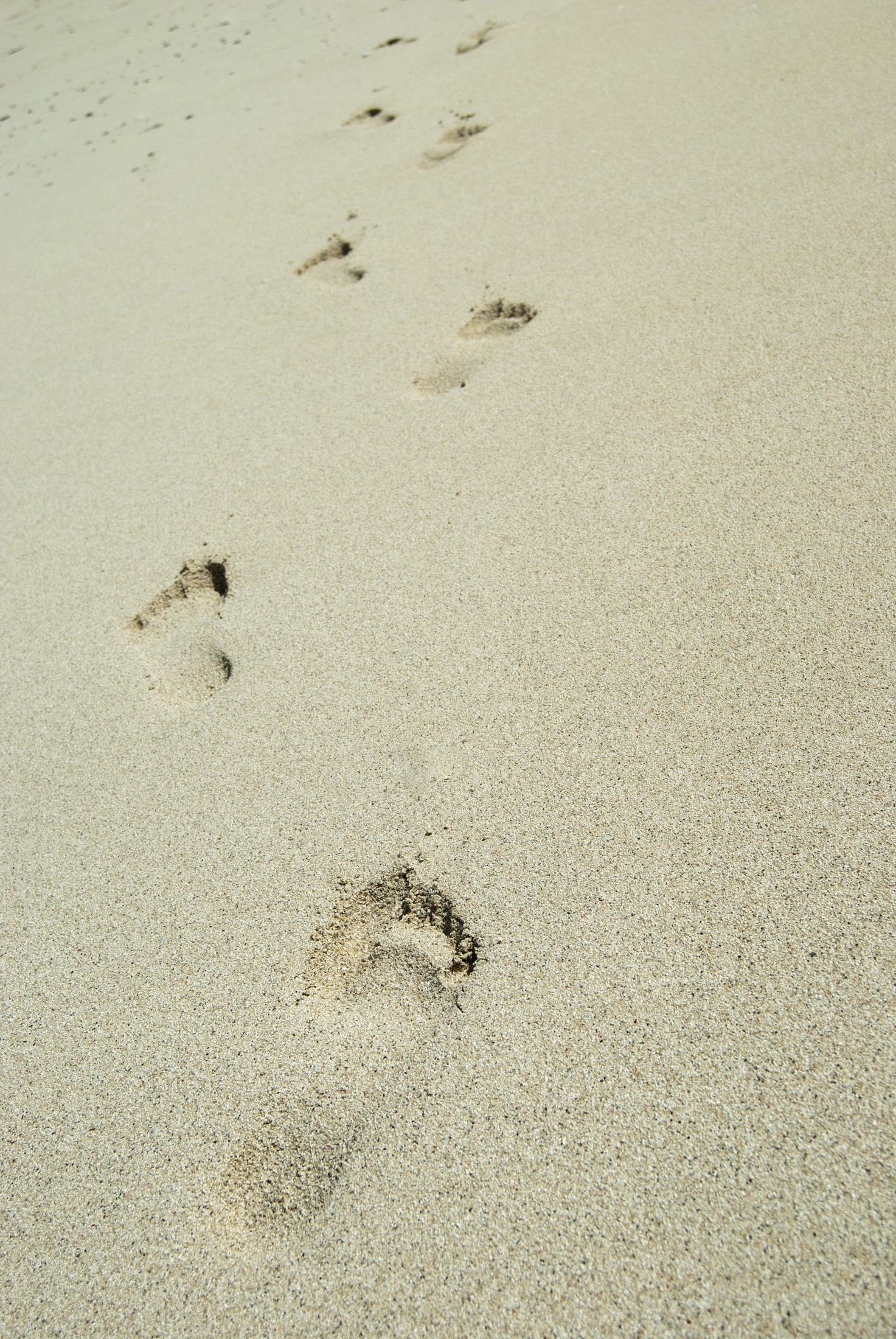 Barefoot footprints on a sandy beach leading away from the camera