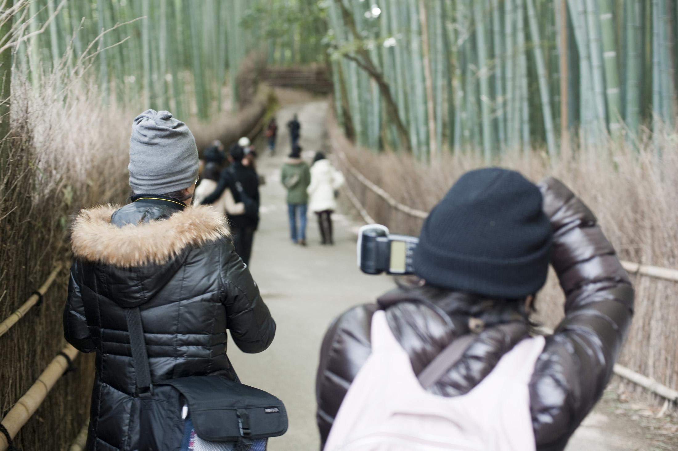 غابات الخيزران في اليابان Bamboo_grove