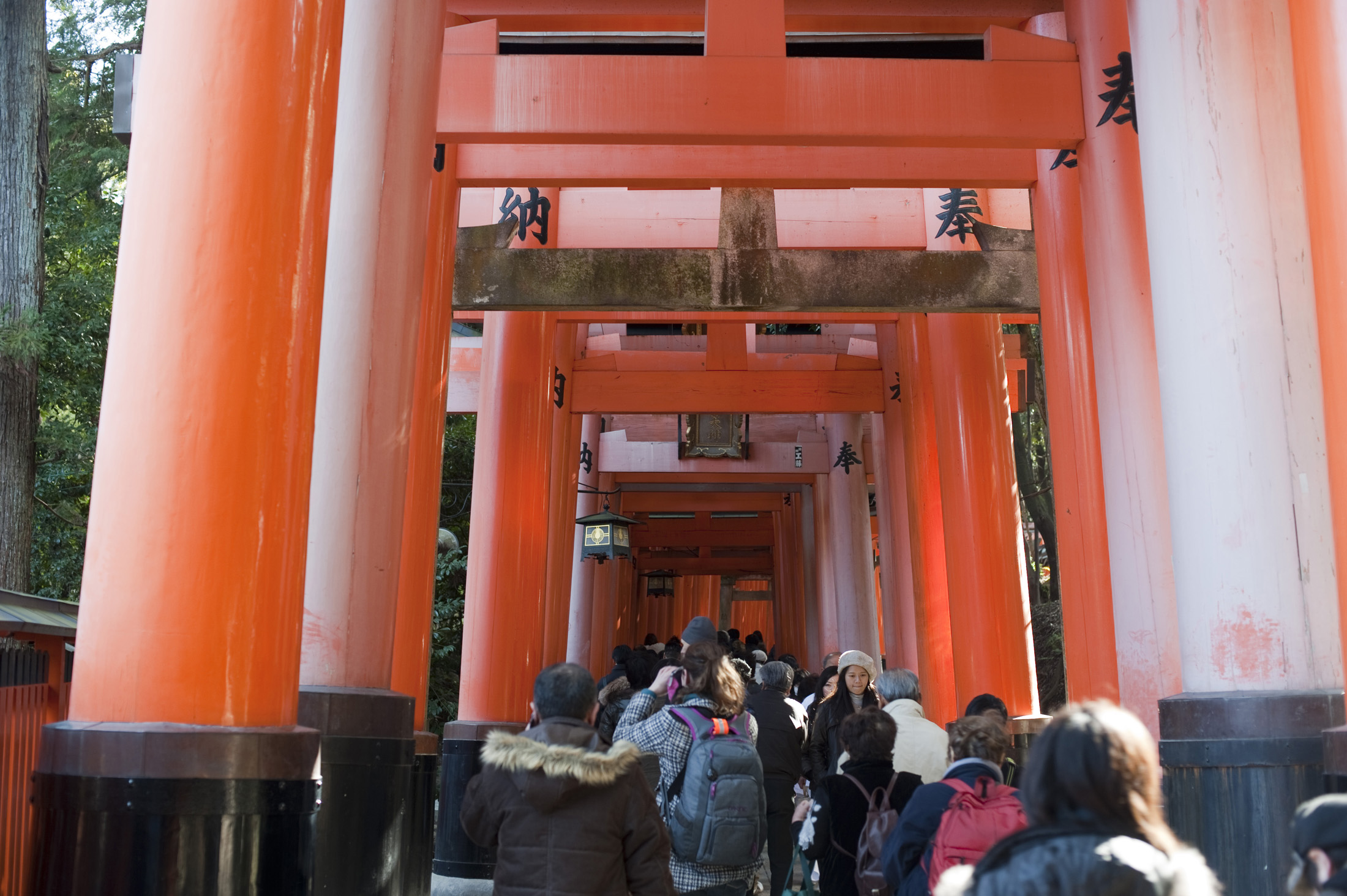a tunnel of torii gates at the Fushimi Inari-taisha shrine