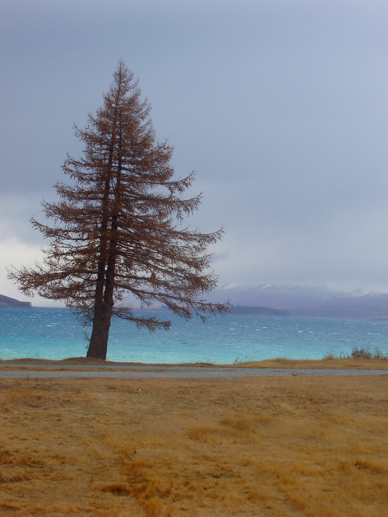 lake pukaki, new zealand, blue glacial waters,