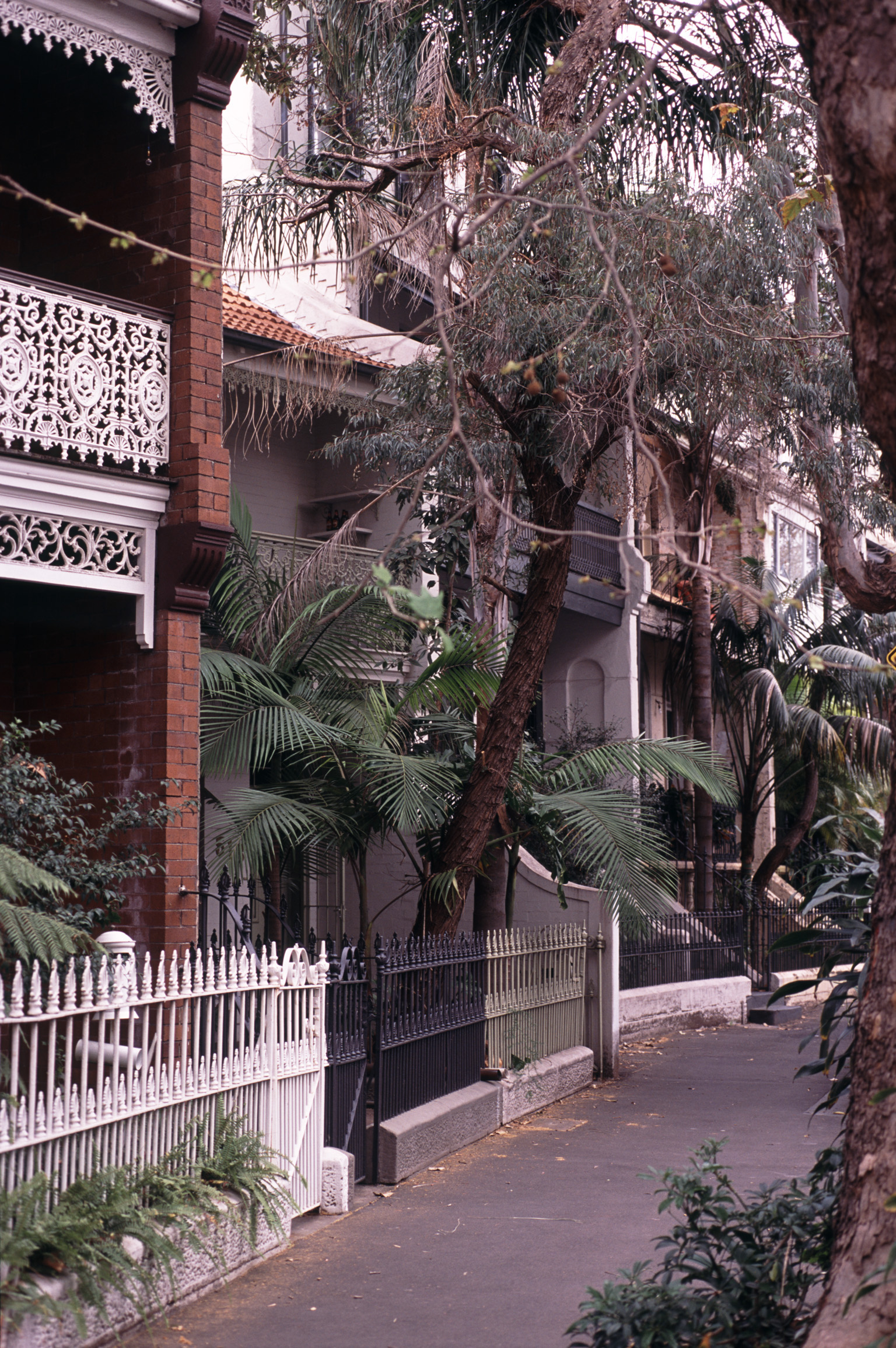 Terraces and Facades of Sydney Federation Heritage Homes