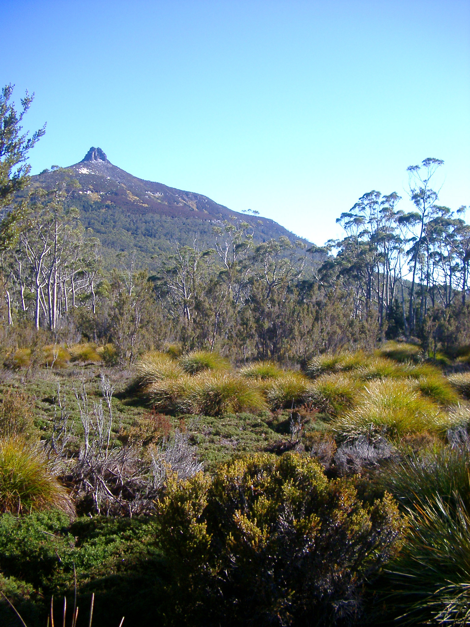 Scenic landscape with button grass, trees and high mountain peaks on the Tasmania Overland Track