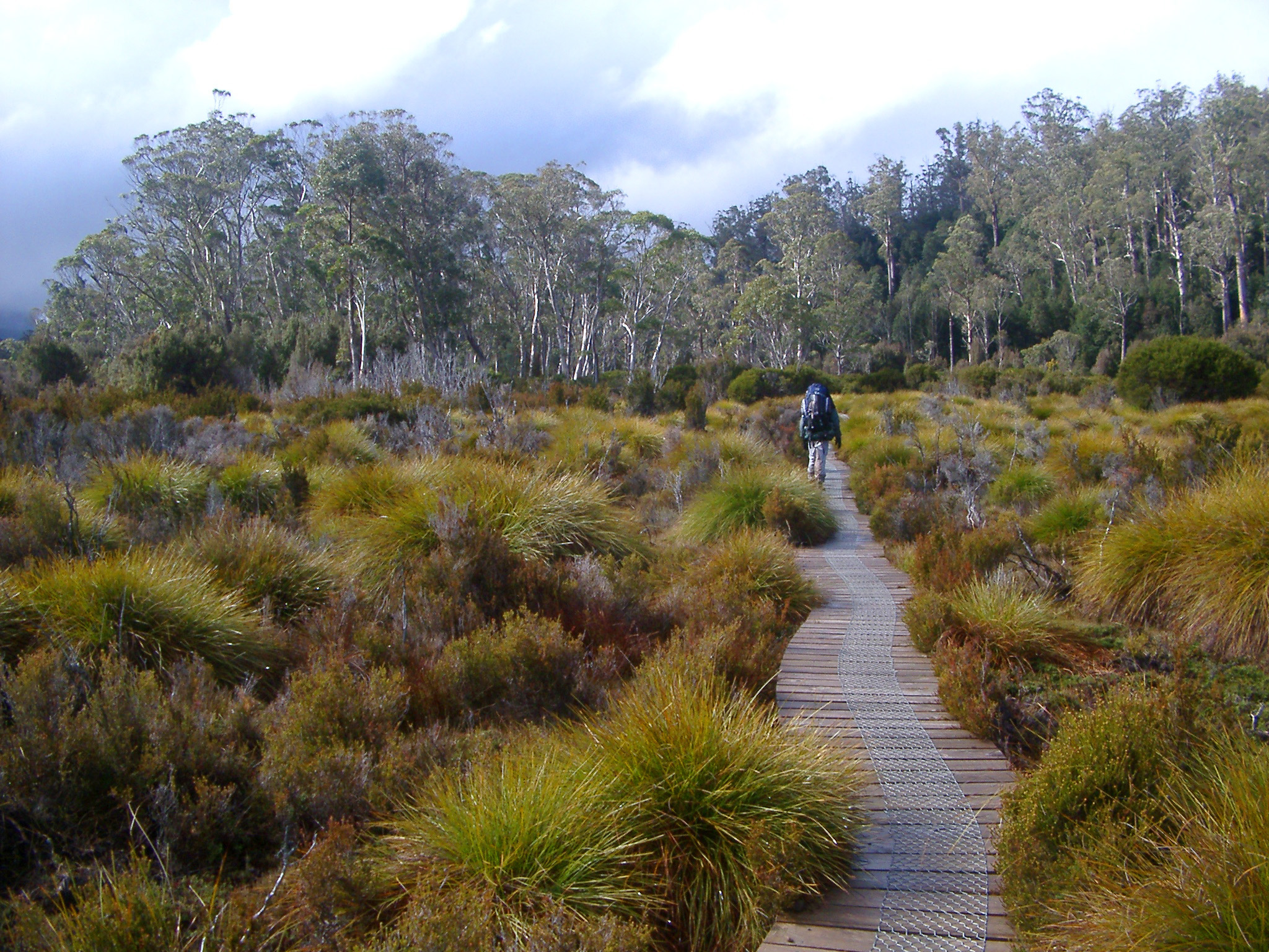 Person walking on a wooden boardwalk on the Tasmania Overland Trail leading across grassland with tufts of button grass towards distant woodland trees