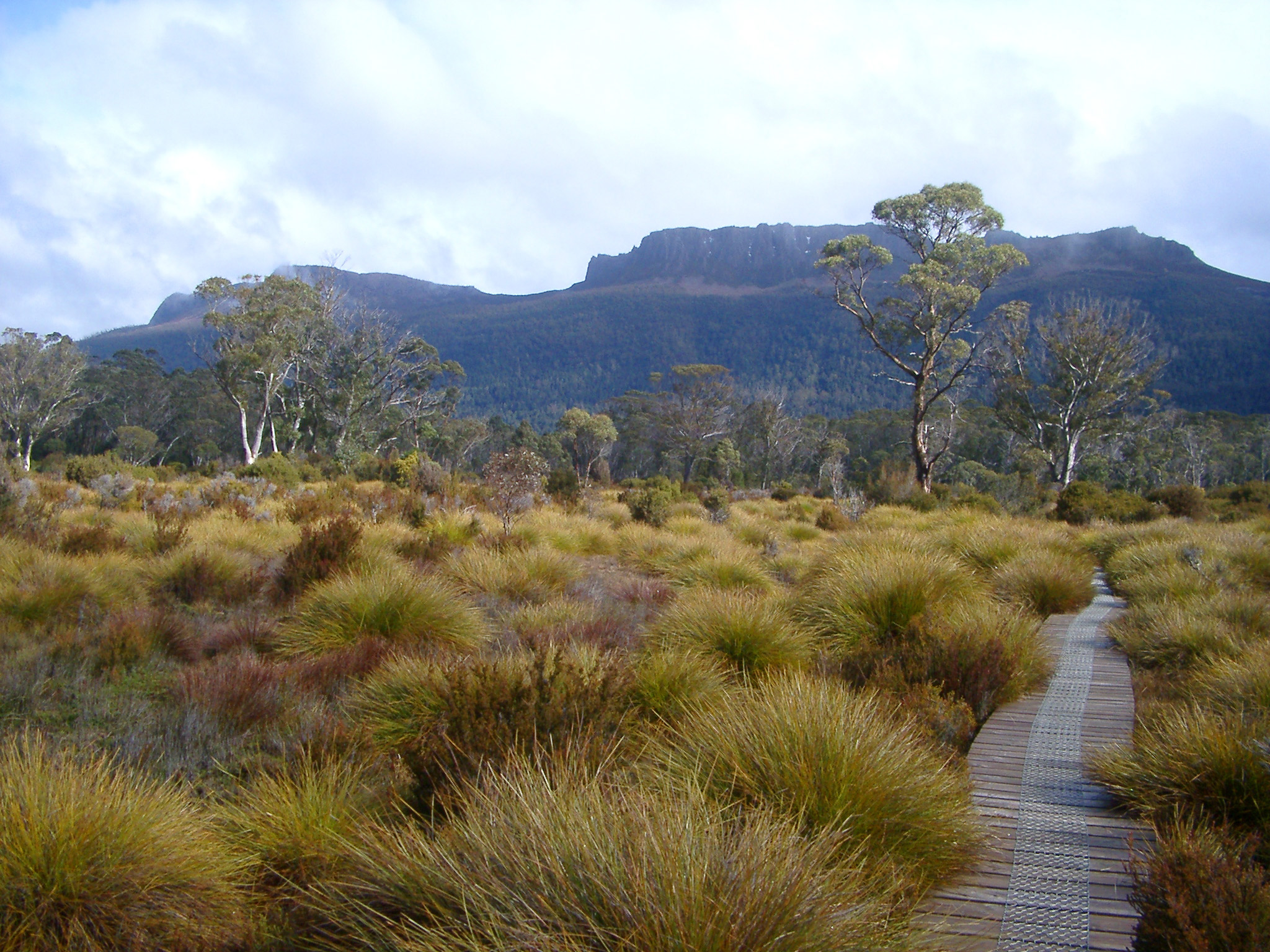 Wooden boardwalk on the overland track, Tasmania, meandering through hummocks of button grass towards distant mountain peaks in a scenic landscape