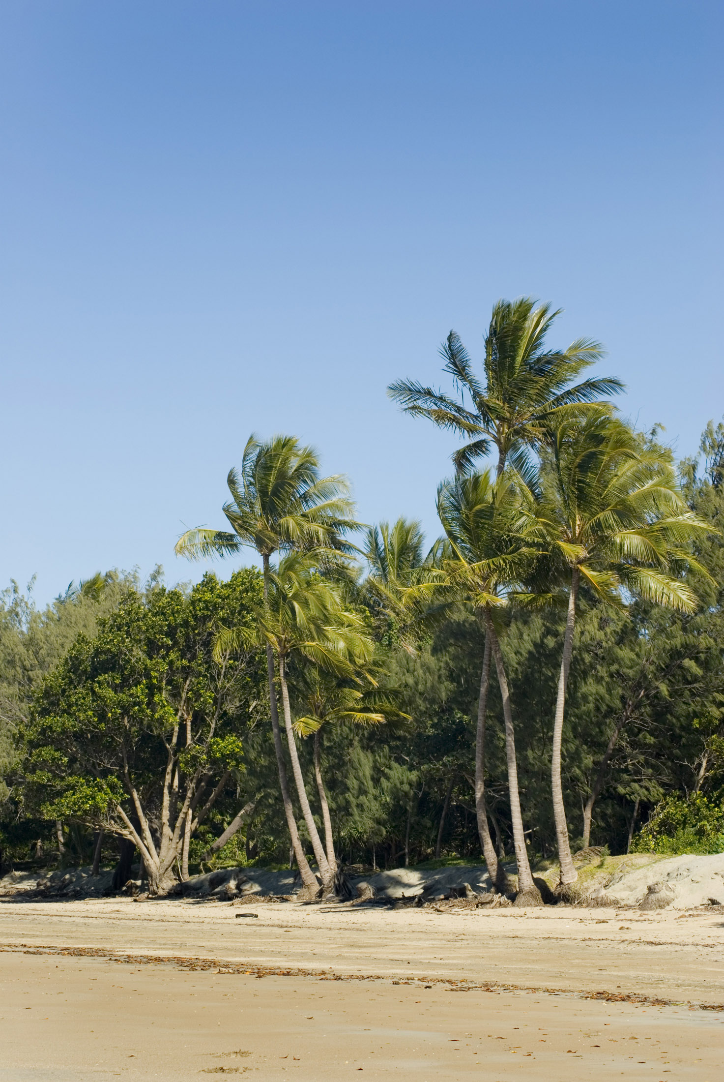 a wide sandy beach lined with palms and other tropical vegetation