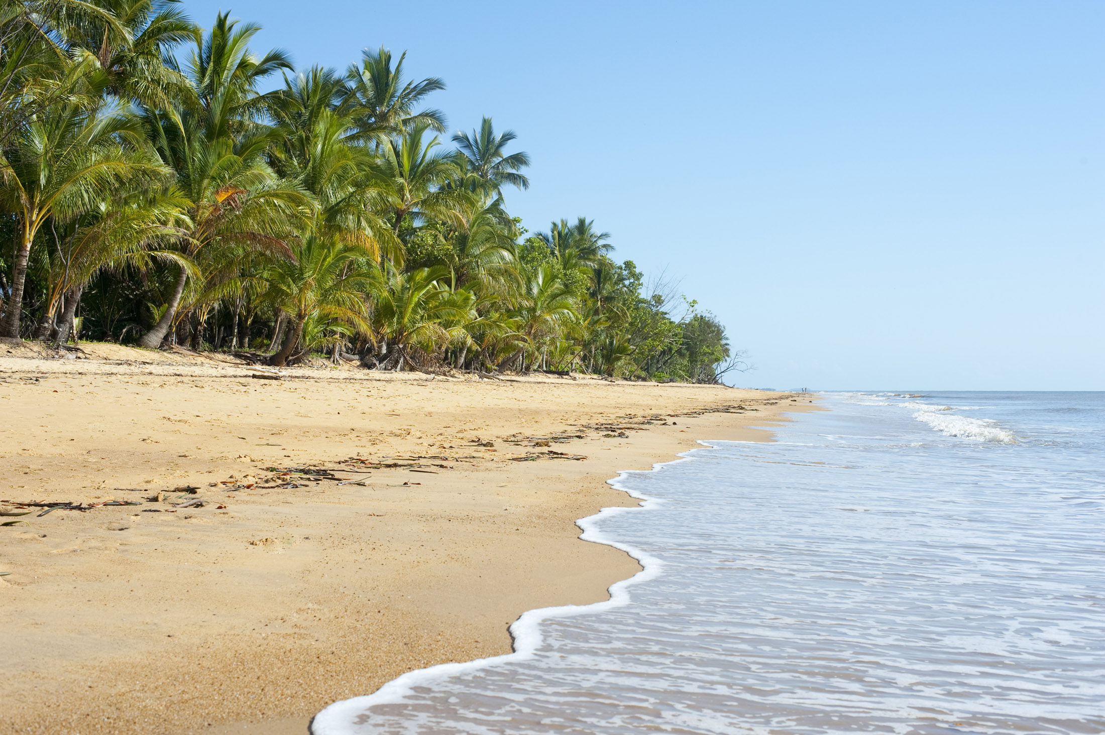 beautiful tropical beach with clean waters and lines of lush tropical coconut palms
