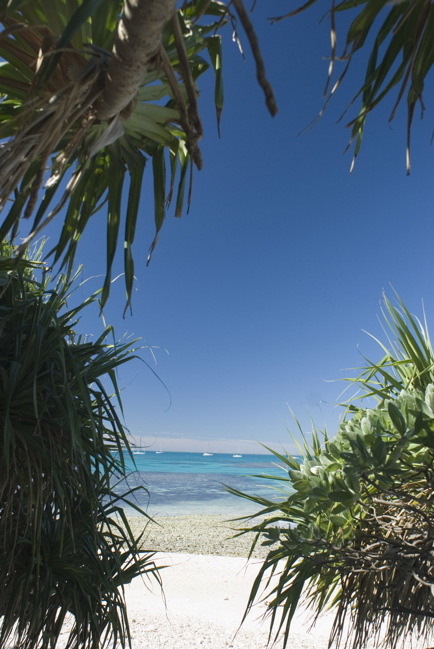 looking out through pandanus trees on a tropical coral caye