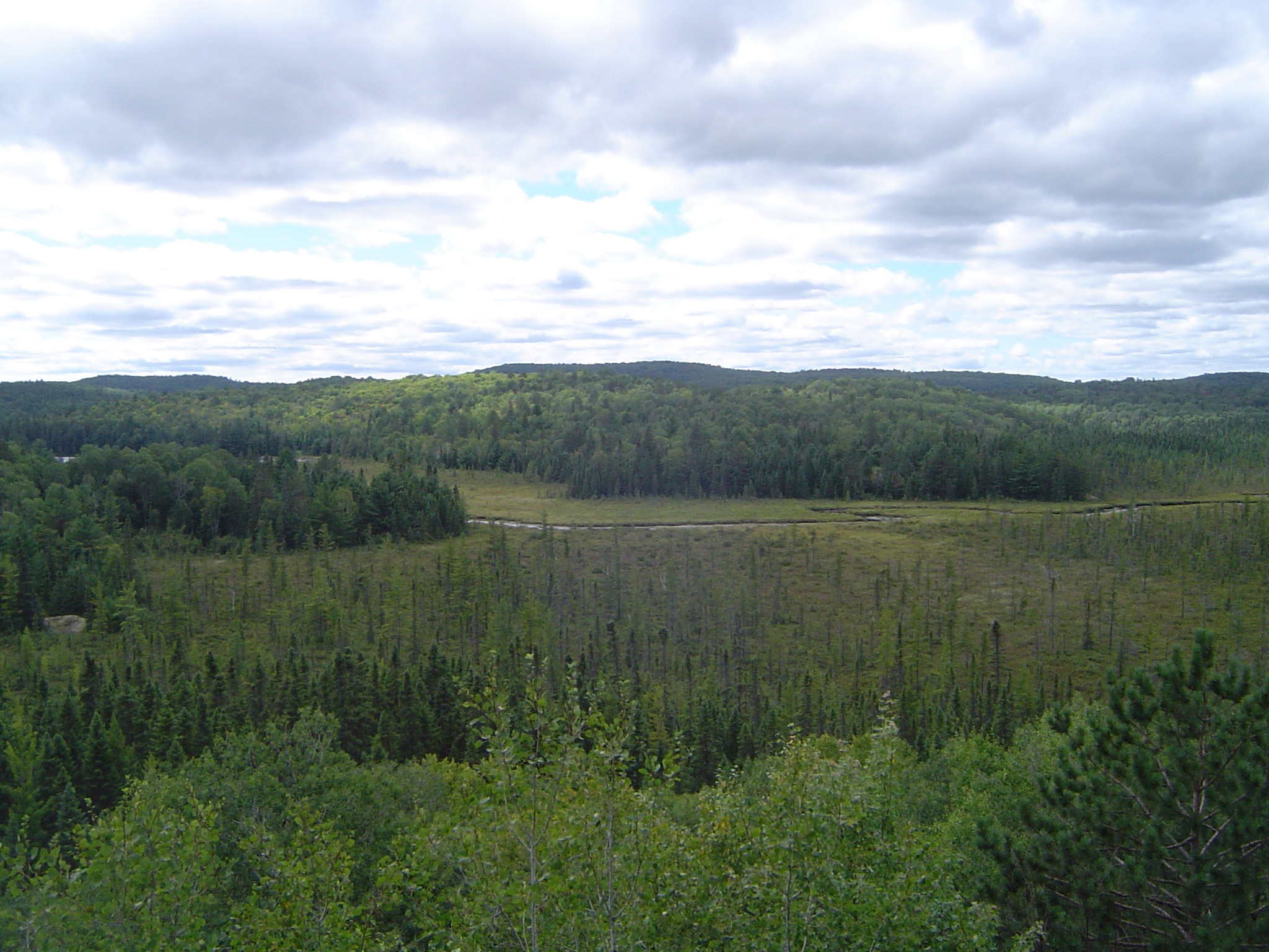 Overview of Forest at Algonquin Park, Ontario, Canada