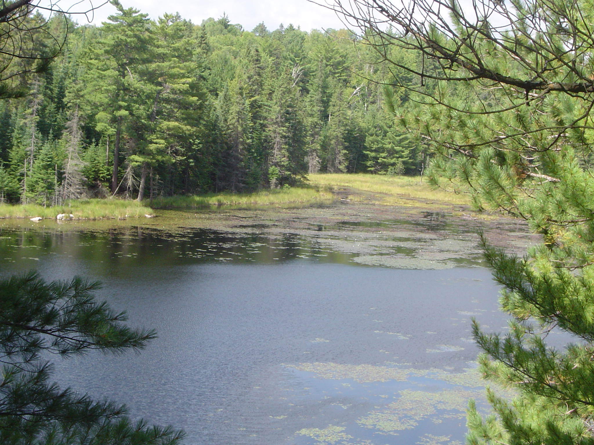 Overview of Lake in Forest in Algonquin Park, Ontario, Canada