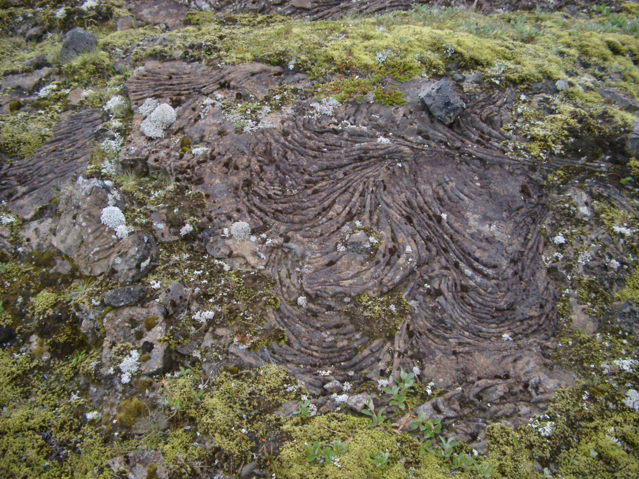 Detail of Volcanic Rock Formation on Ground in Iceland