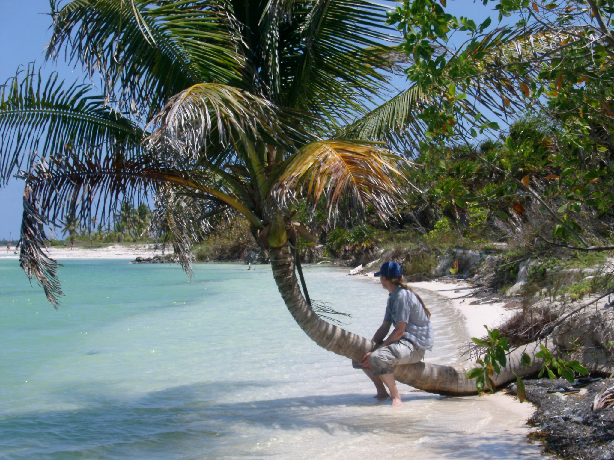 Man sitting on the trunk of a tropical palm overhanging golden beach sand and crystal clear blue water in Mexico