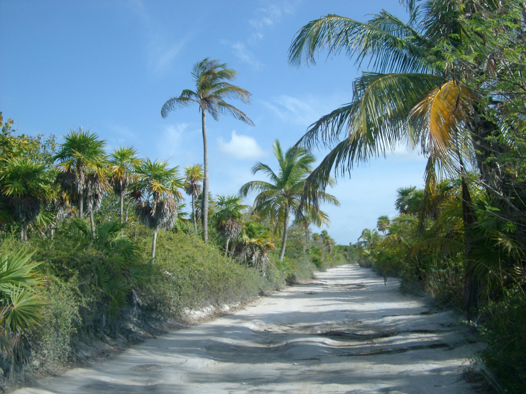 Dirt road through tropical jungle in Mexico lined with palm trees providing shade on a hot summer day in a travel, vacation and getaway concept