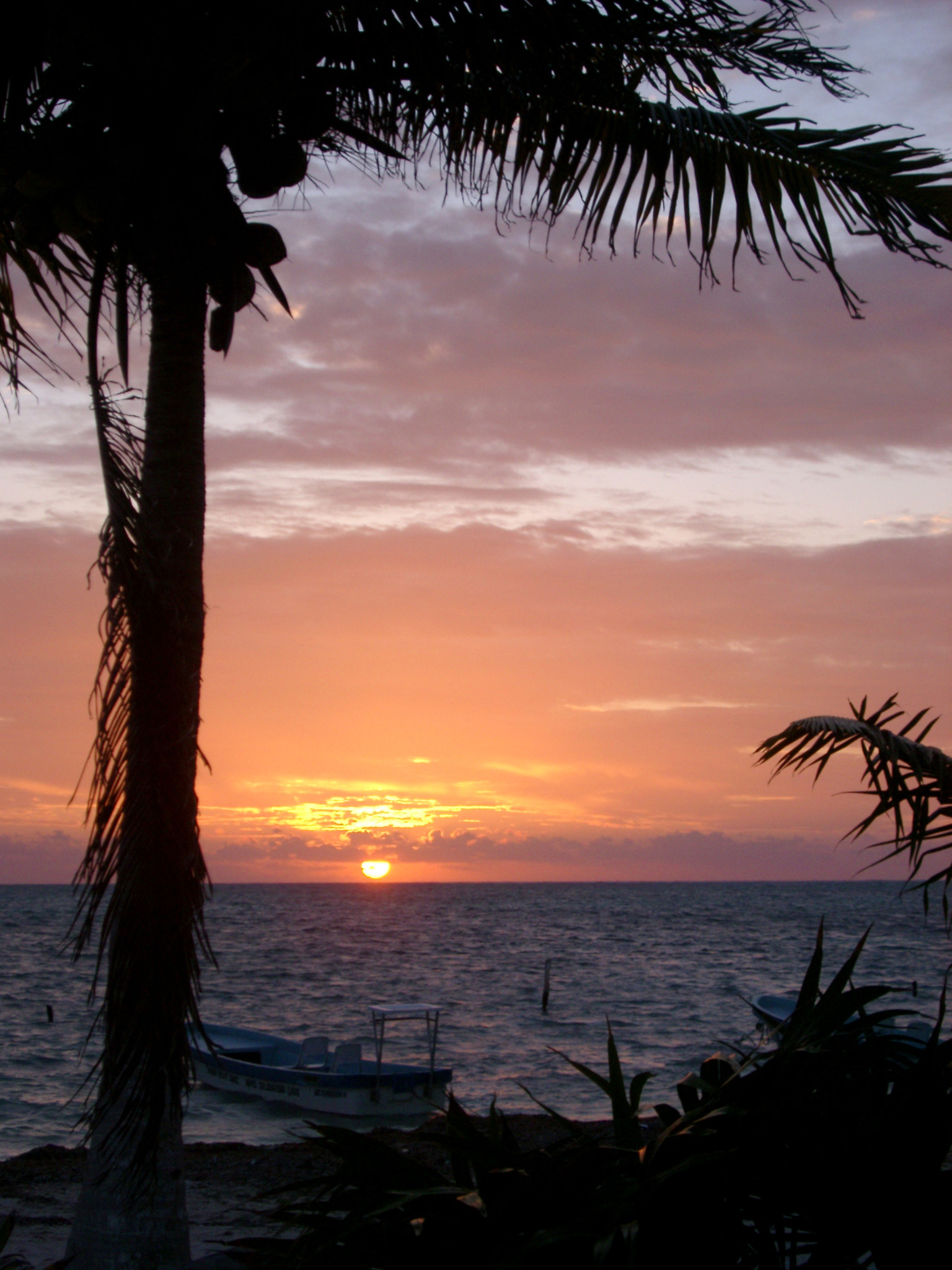 Palm trees silhouetted against a colorful tropical sunset over the ocean in Mexico, symbolic of summer vacations and travel