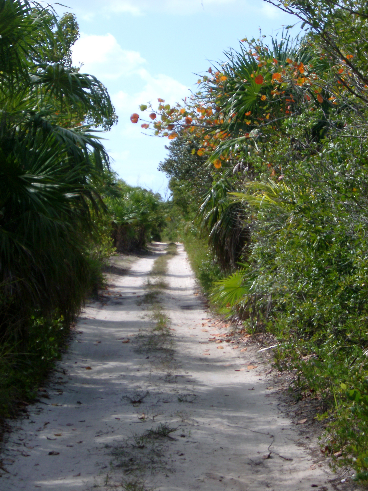Entrance Road to Beautiful Punta Allen Mexico Surrounded by Green Plants and Grasses.