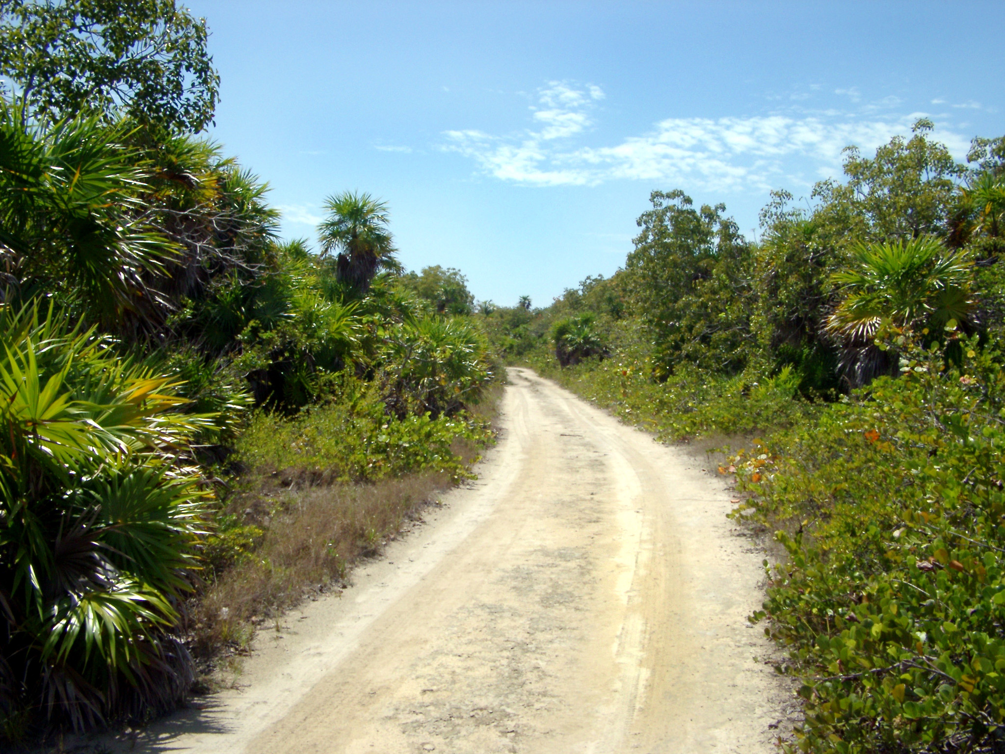 Isolated Dirt Road through Jungle Forest in Punta Allen, Mexico on Sunny Day