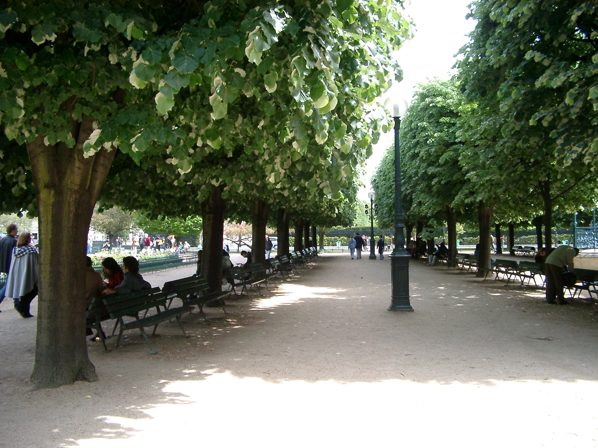 Receding rows of leafy green trees in a Paris park with wooden benches on a gravel walkway to relax and enjoy the sunshine