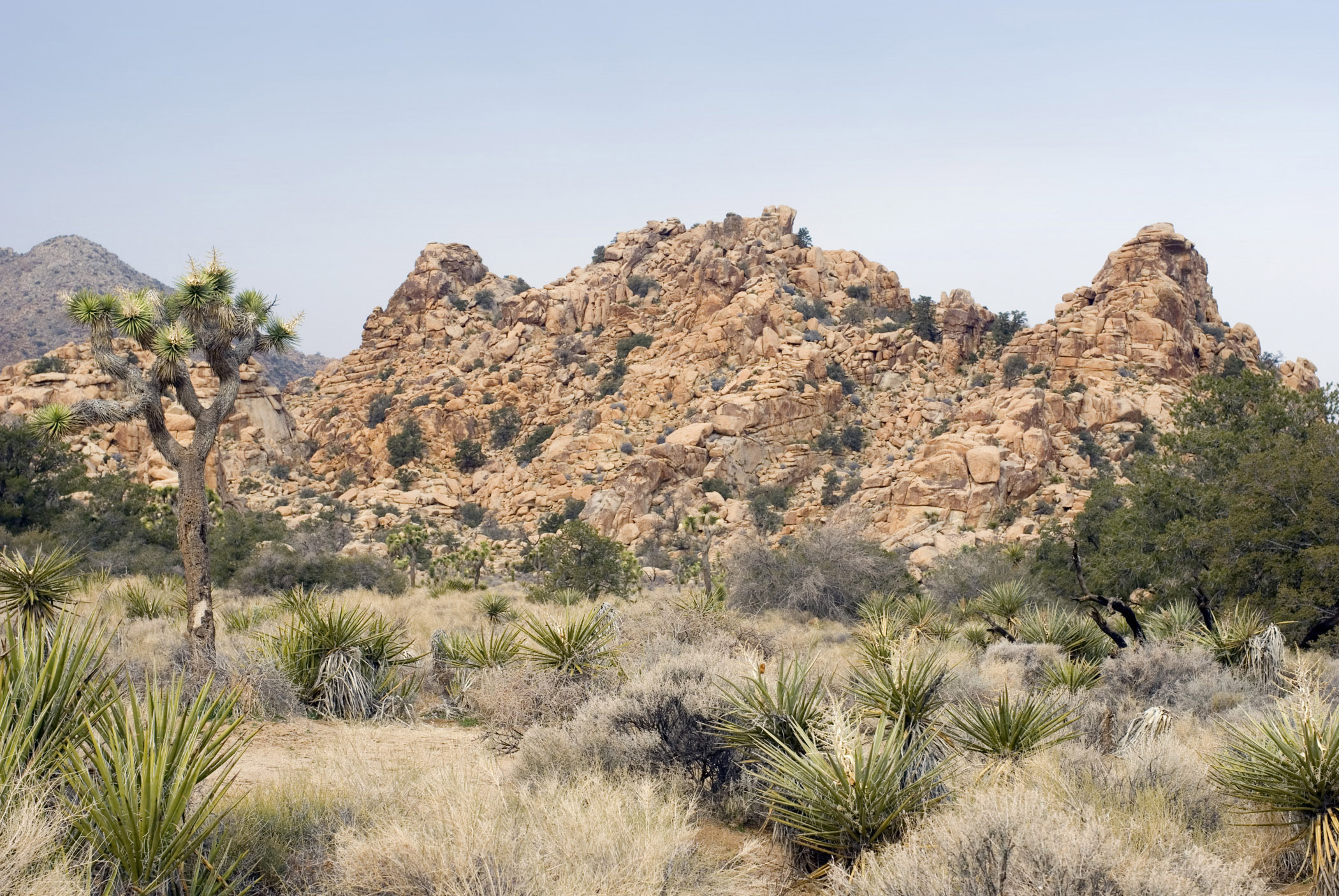 Mountainous arid landscape in Joshua Tree National Park in south eastern California with its dessert ecosystems