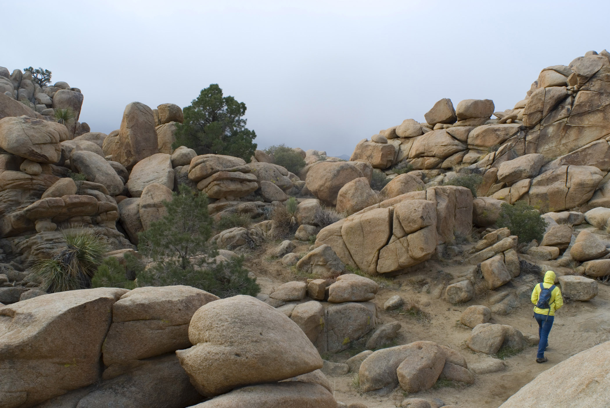 Person Hiking in Rocky Landscape, Joshua Tree National Park, California, USA