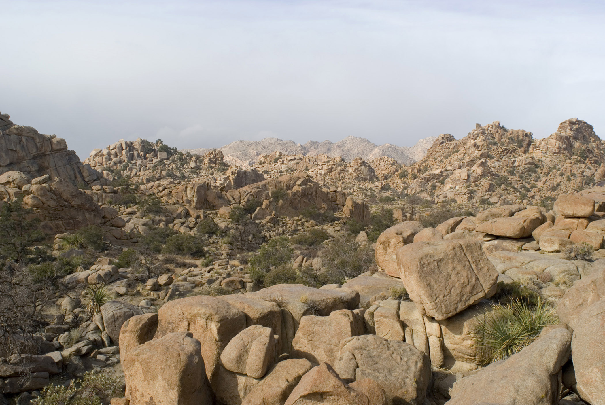 Big Rocks with Small Green Grasses on Ground at Joshua Tree National Park. Isolated on Lighter Blue Gray Sky Background.