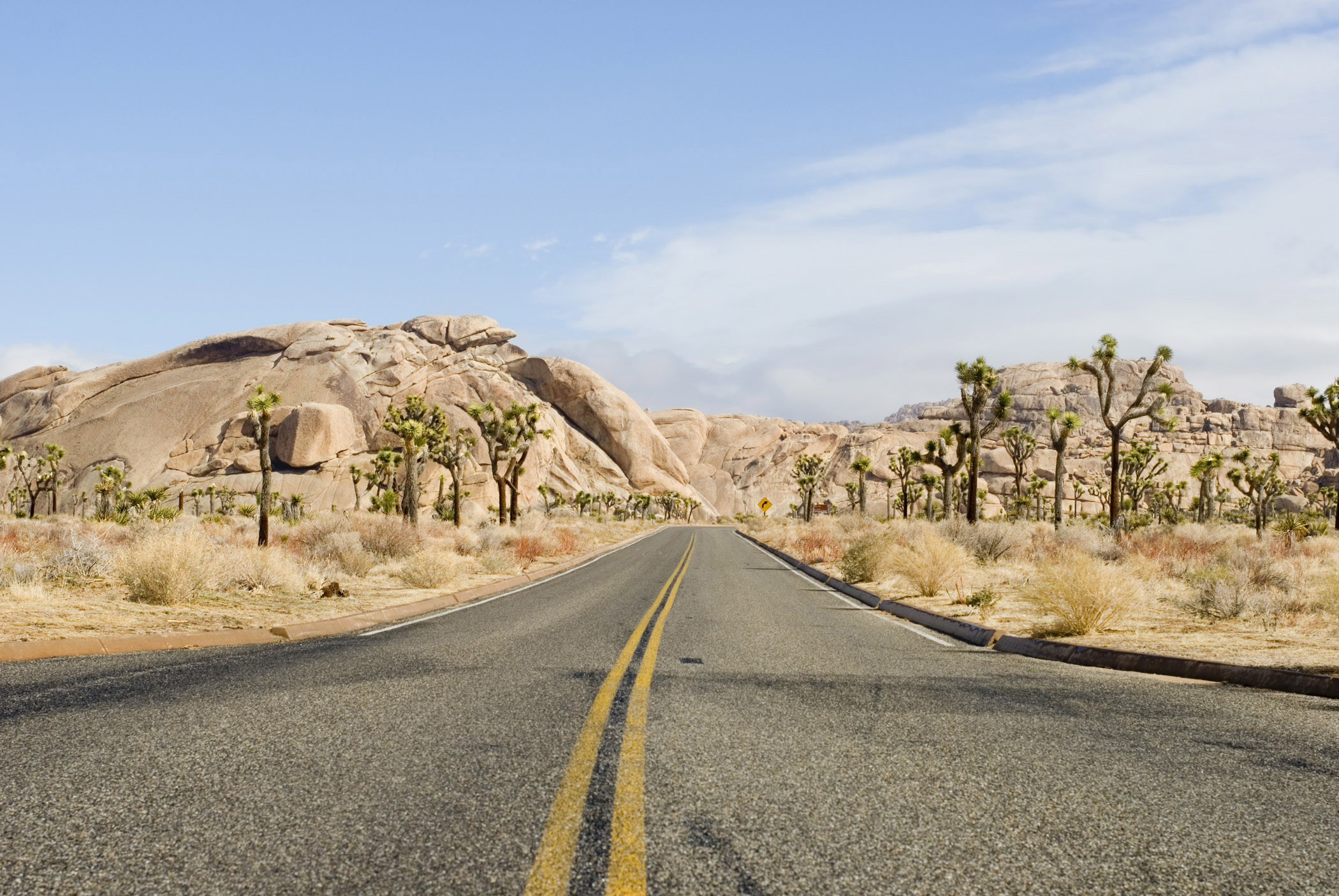 5 Expert Tips for Visiting Joshua Tree National Park with Kids