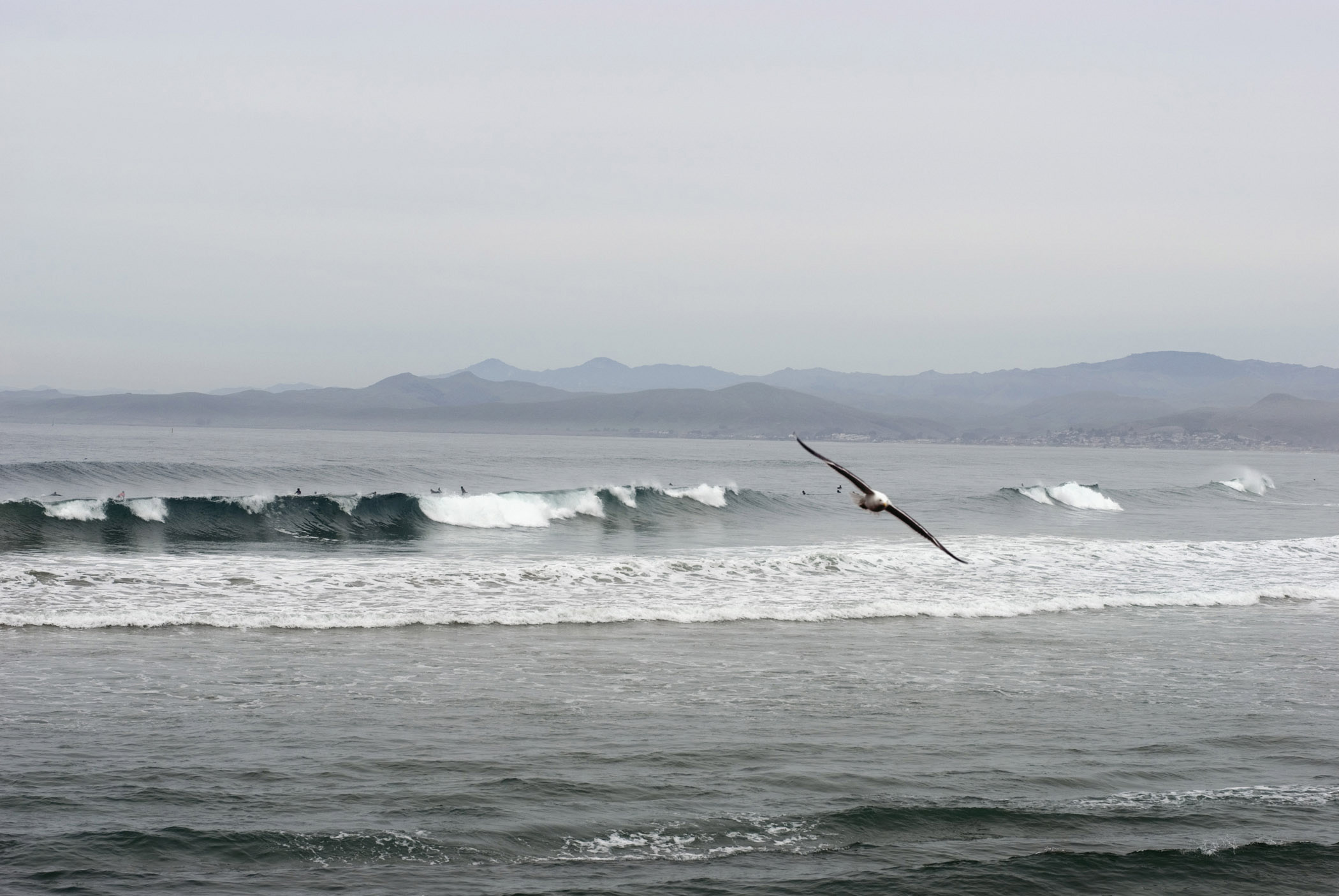 Bird Flying Above Waves of Beautiful Morro Bay Located in California. Captured in Extensive View with Mountains Afar.