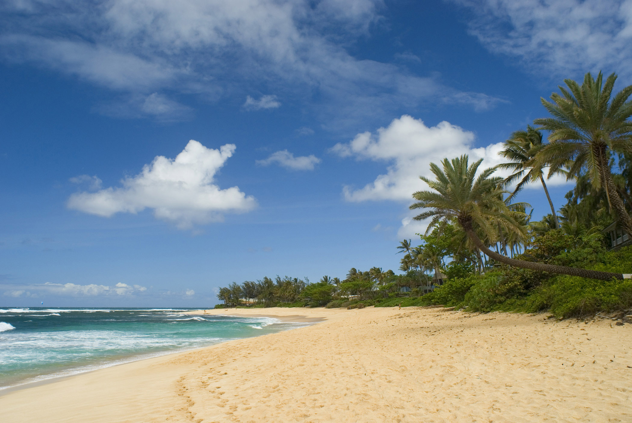 Sandy Beach Palm Tree