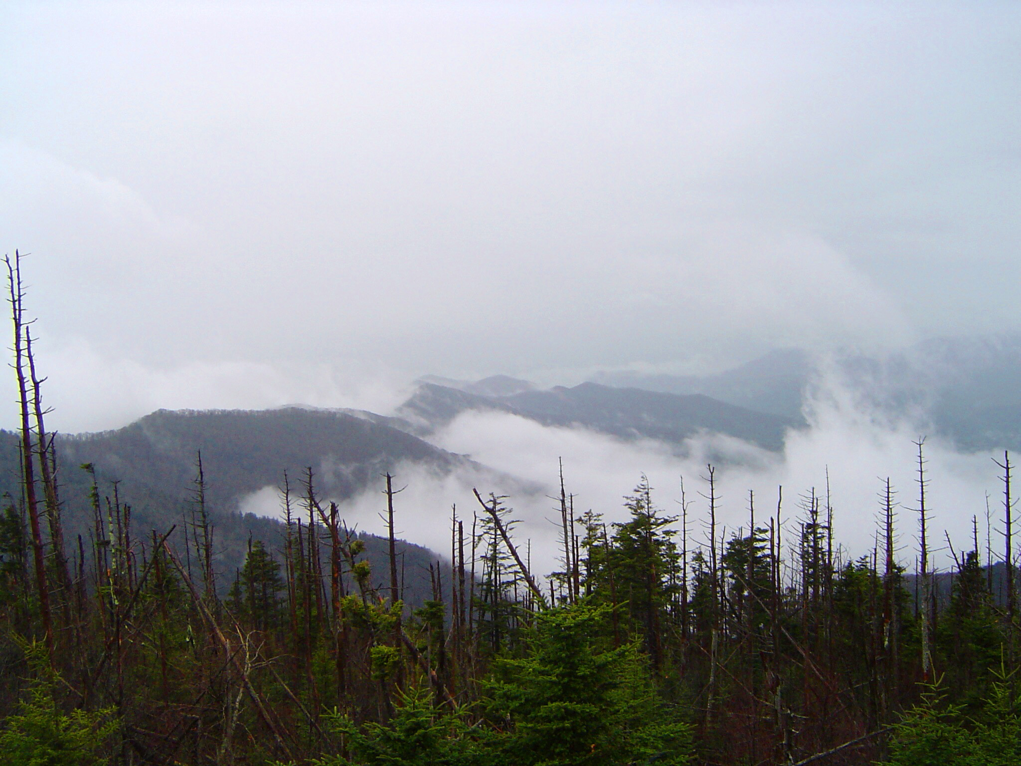 Mount Washington, USA, on a misty day with a foreground view of dead trees and cloud in the valleys