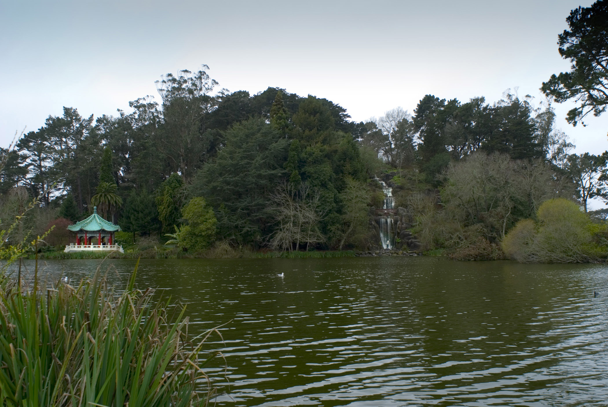 Beautiful River Surrounded by Green Plants and Trees at Golden Gate Park San Francisco.
