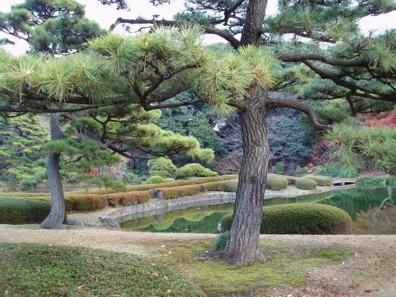 Home Garden Trees