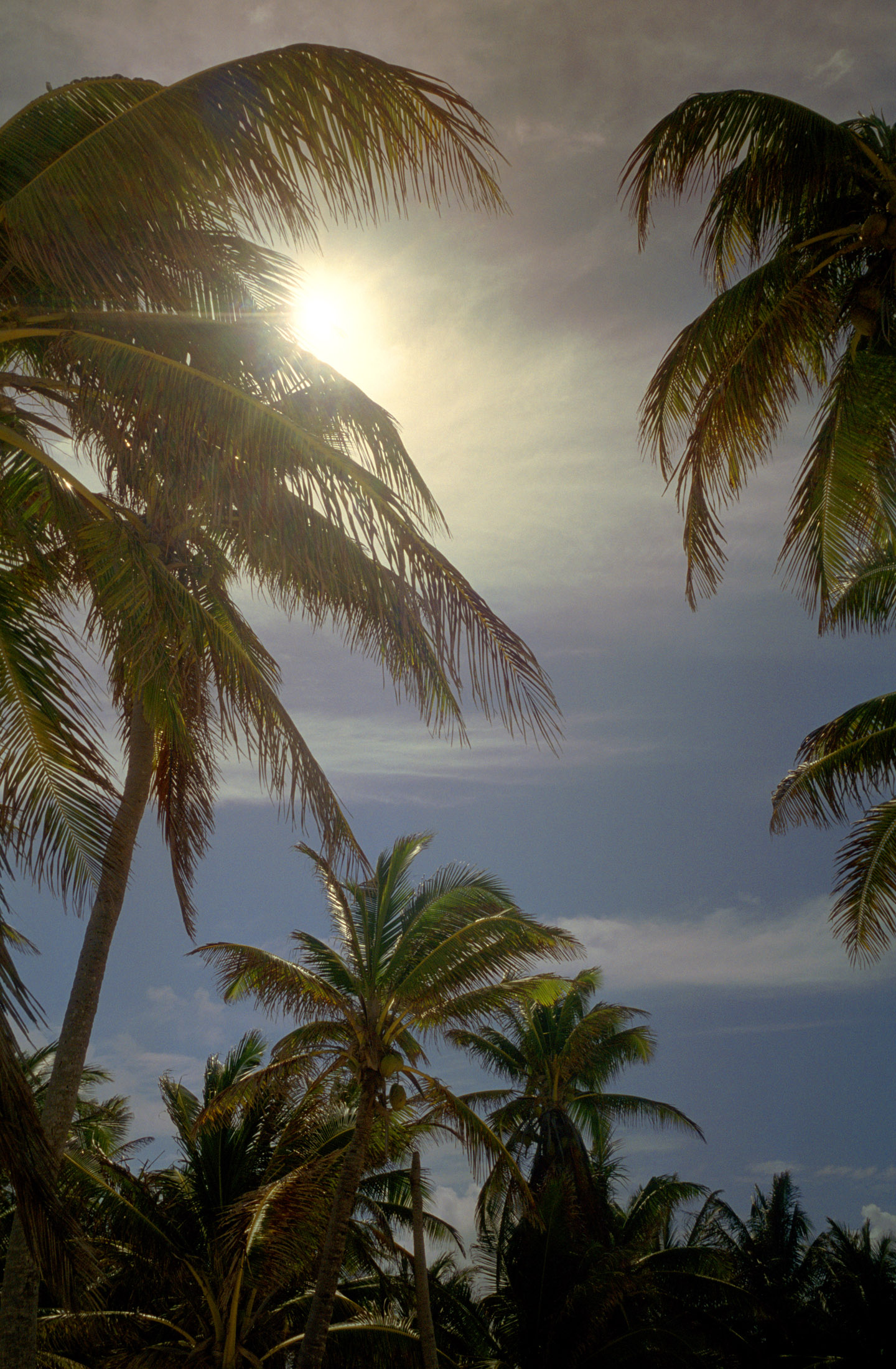 Free Stock Photo Of Sunny Palms Photoeverywhere